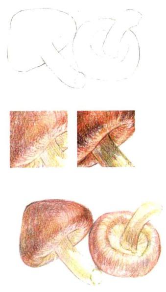 儿童香菇怎么画(1)
